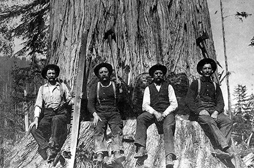 Vintage picture of four lumber man at the base of a tree